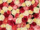 flowergallery