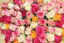Интернет-магазин «Flower Piter»