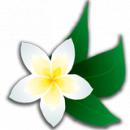 Салон цветов «Жасмин», Энгельс