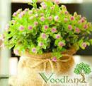 Интернет-магазин «ВудЛэнд - растения для сада»