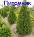 Егорьевский Питомник Никитенко Александра, Ковров