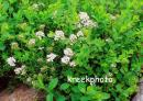 """Питомник декоративных растений """"ЭКО-САД Восточный"""", Краснодар"""