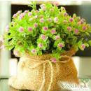 Интернет-магазин «ВудЛэнд - Растения для вашего сада»