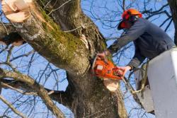 Спил деревьев и кустов в Томске.