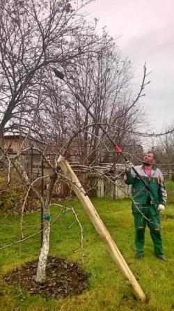 Обрезка плодовых деревьев и кустарников весной