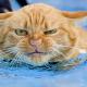 Полезные советы от ветеринара. Кастрация, купание, кости - за и против.